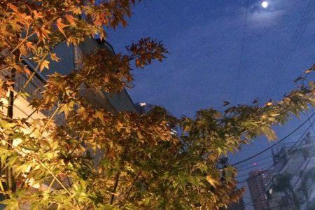 やっと秋らしく2